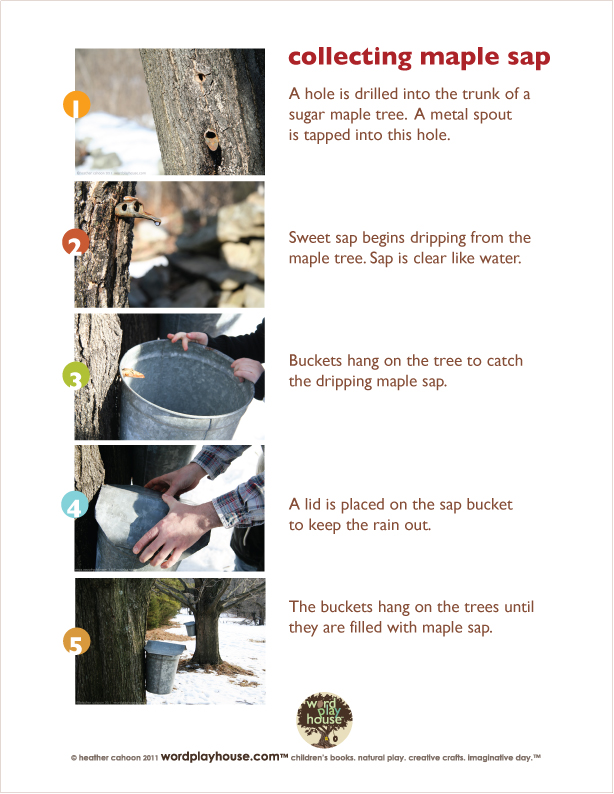 Tapping-maple-trees-printable