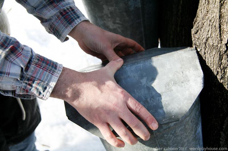 Placing-lid-on-sap-bucket