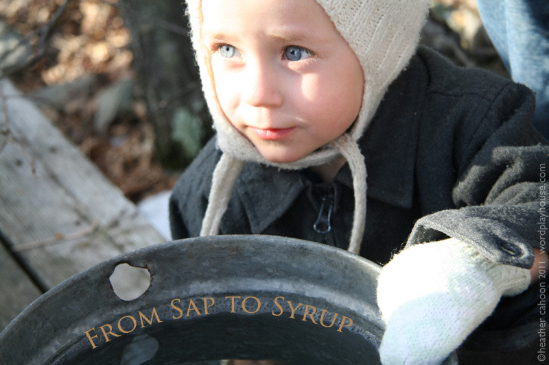 Child-looking-in-Maple-sap-bucket