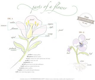 Parts-of-a-flower-free-printable