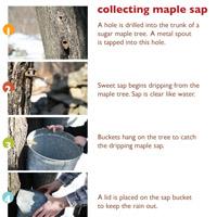 Free printables! maple sugaring