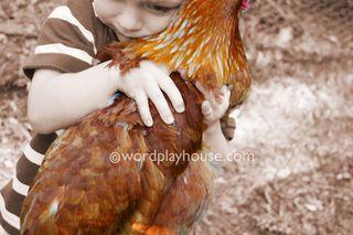 Raising-backyard-chickens